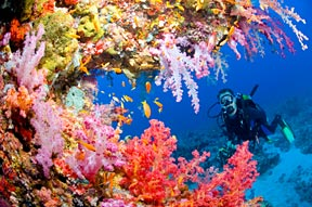 The Red Sea is home to a plethora of stunning sea life